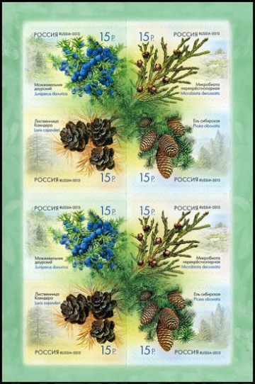 Лист почтовых марок - Россия 2013 № 1682-1685 Флора России. Шишки хвойных деревьев и кустарников